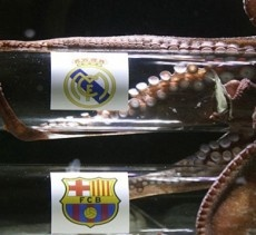 Octopus Predicts Madrid Final